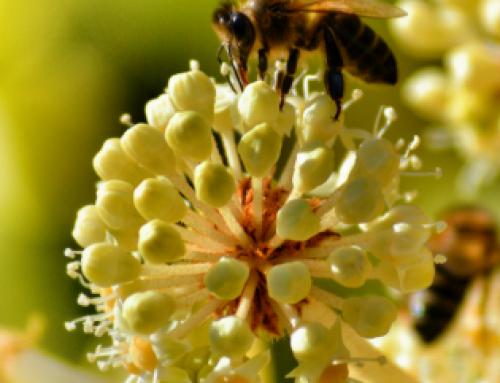 Bijen, wespen, muggen; hoe heb je het minste last als je gestoken bent?